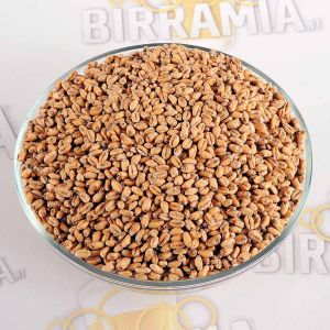 Malto in grani Toasted Wheat (Weizen) 25 kg Crisp Malting